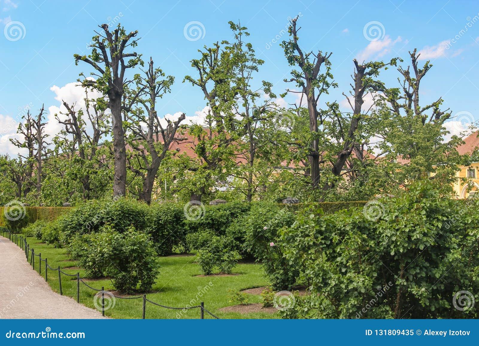 Λίγο σπίτι στον κήπο με τα τακτοποιημένα δέντρα μηλιάς κοντά στη Βιέννη Αυστρία