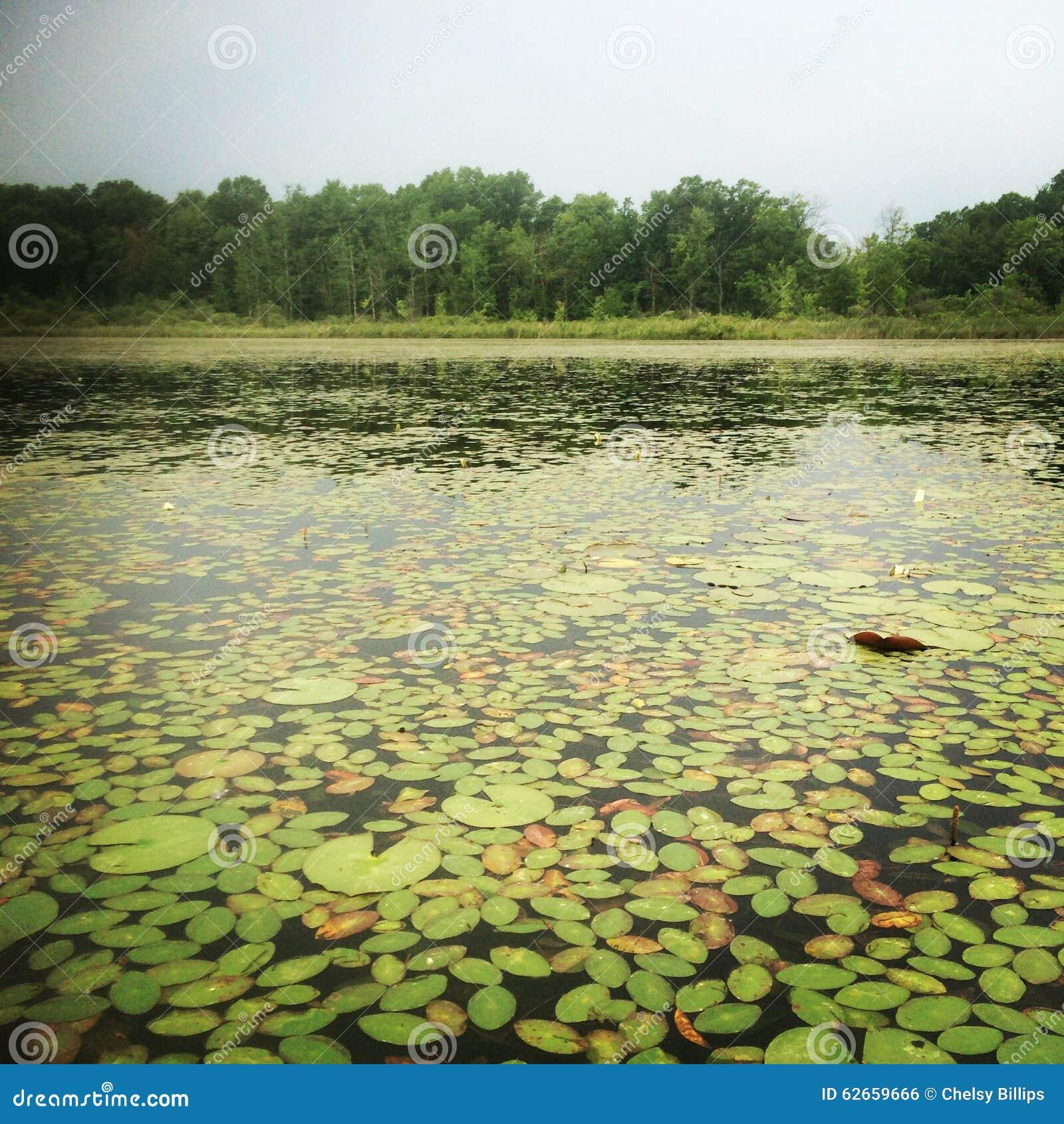 Λίμνη μαξιλαριών κρίνων coverd