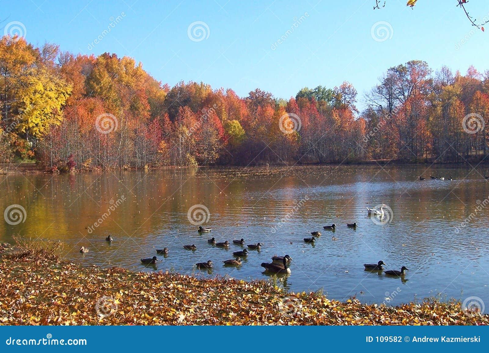λίμνη πτώσης παπιών
