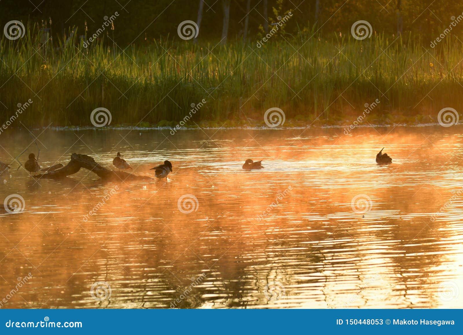 Λίμνη της Misty Burnaby