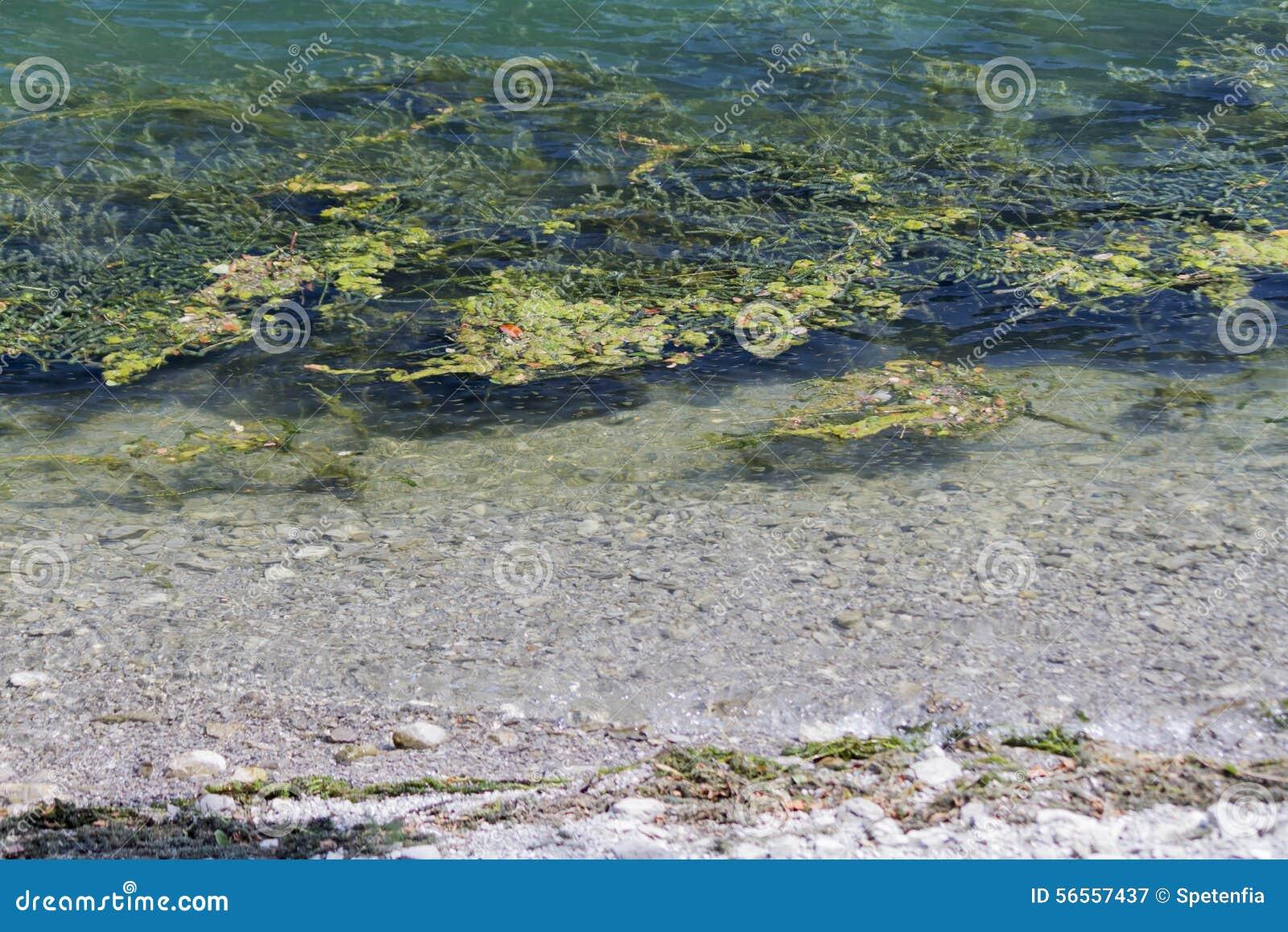 Download Λίμνη τοπίων με τα άλγη στοκ εικόνα. εικόνα από ύδωρ - 56557437