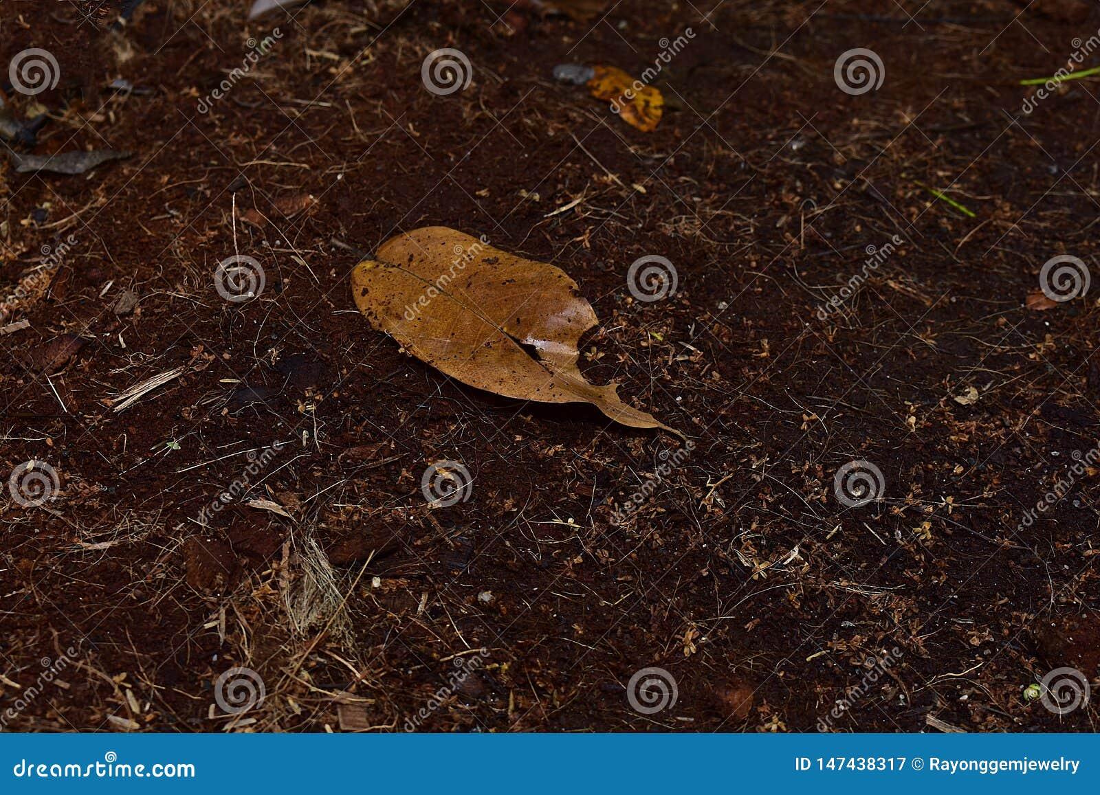 Λίπασμα από το κοχύλι καρύδων