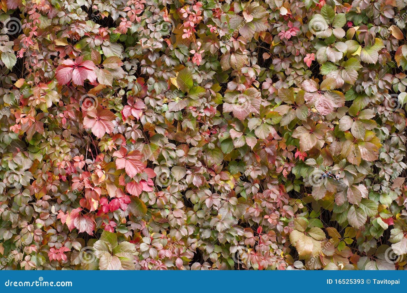 λαμπρή σύσταση φθινοπώρου