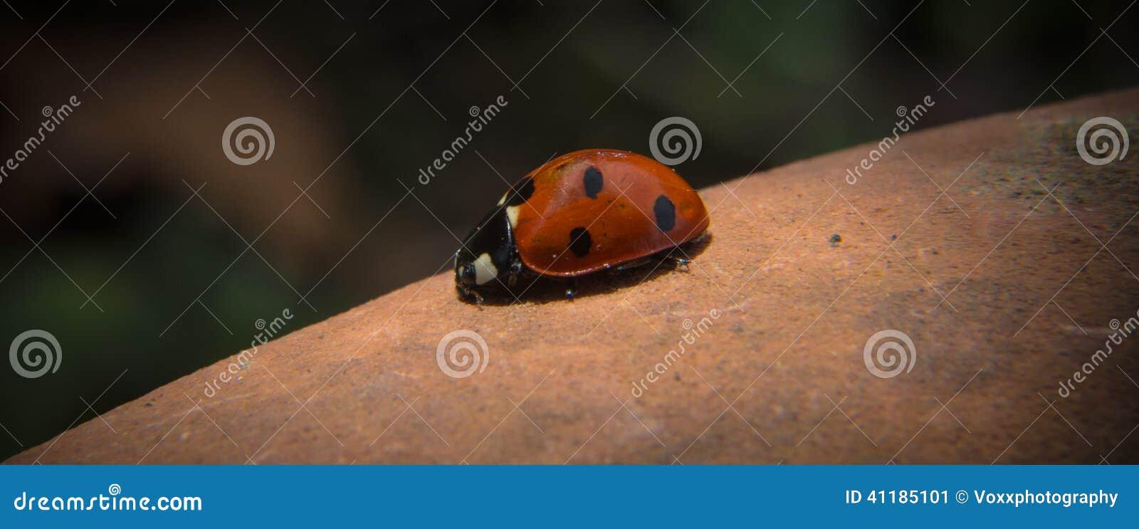 Λαμπρίτσα Ladybug