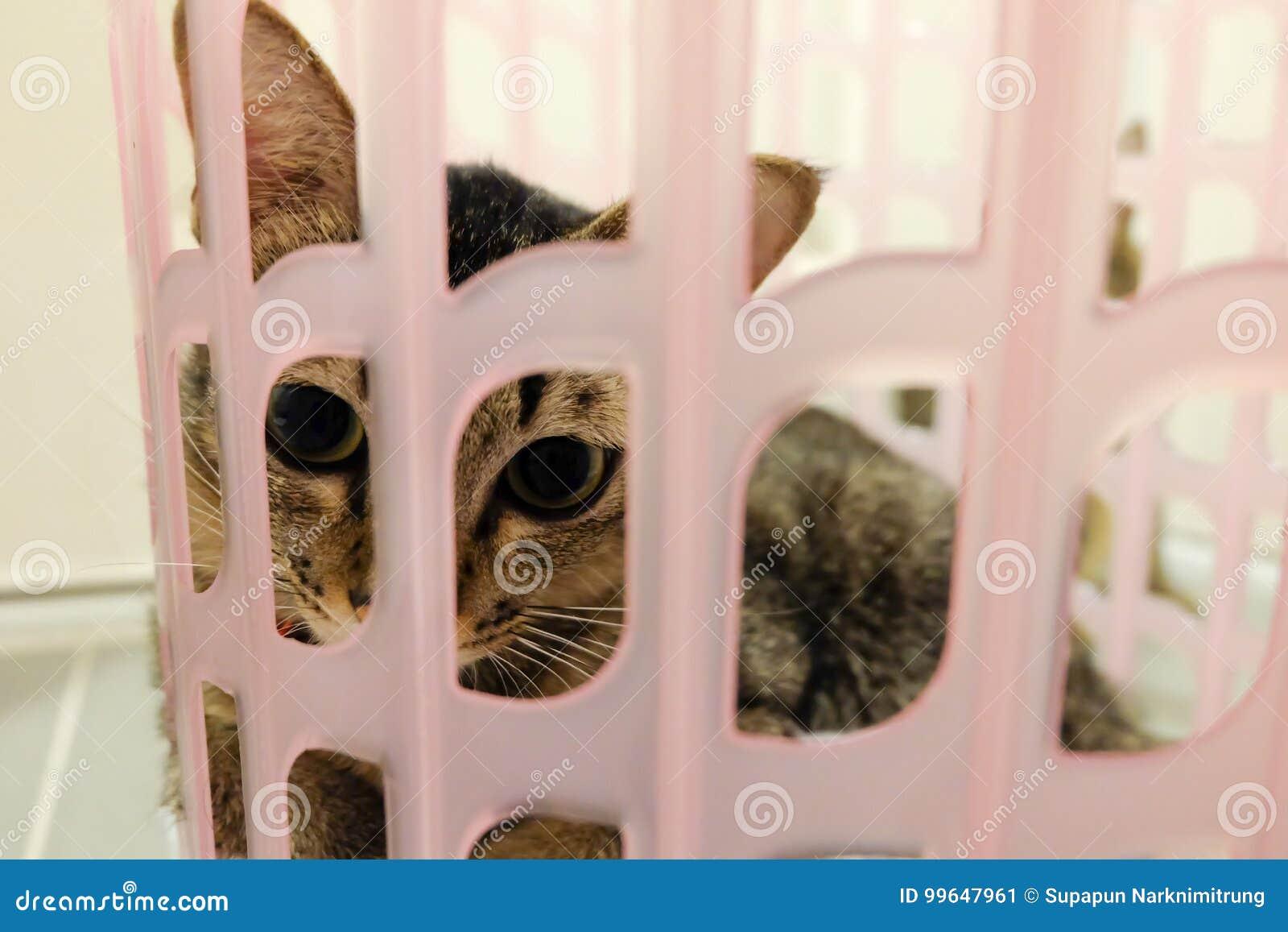 Λατρευτή γάτα που βρίσκεται στο καλάθι Καλά χαριτωμένα γατάκια στο σπίτι
