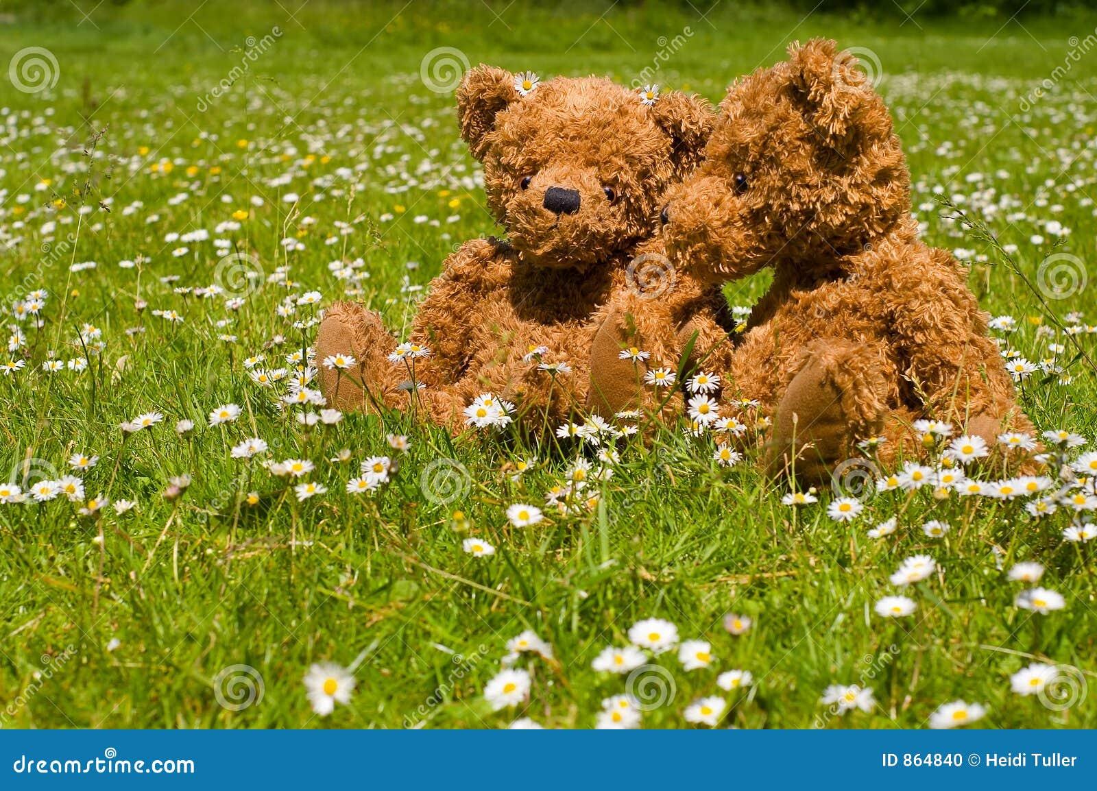 λατρευτό ζεύγος teddybear