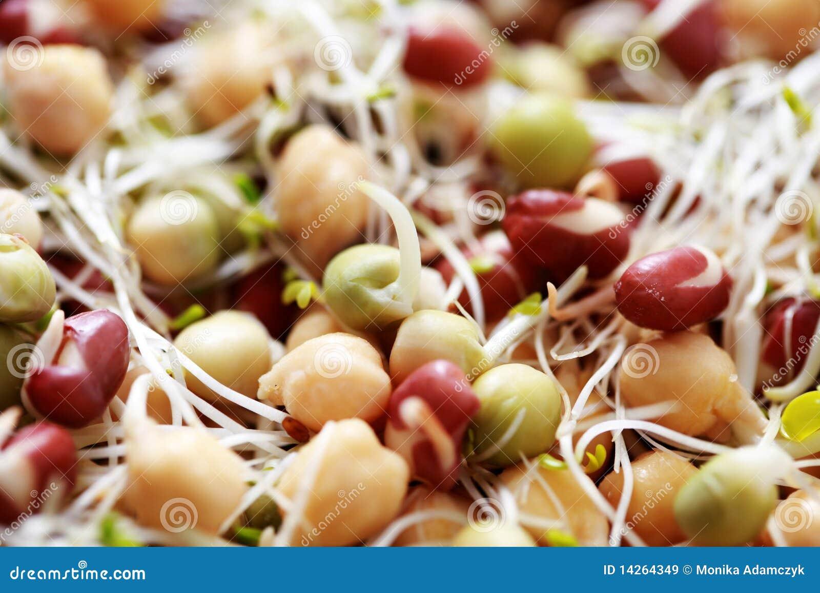 λαχανικό νεαρών βλαστών