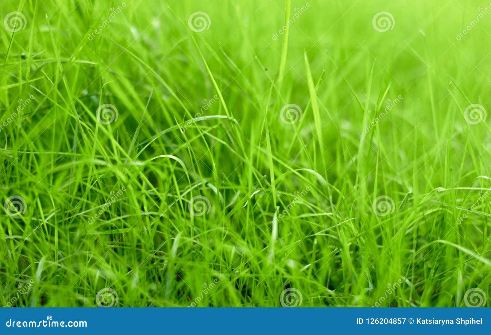 Λεπίδες της πράσινης χλόης του χορτοτάπητα, μακροεντολή, σύσταση υποβάθρου