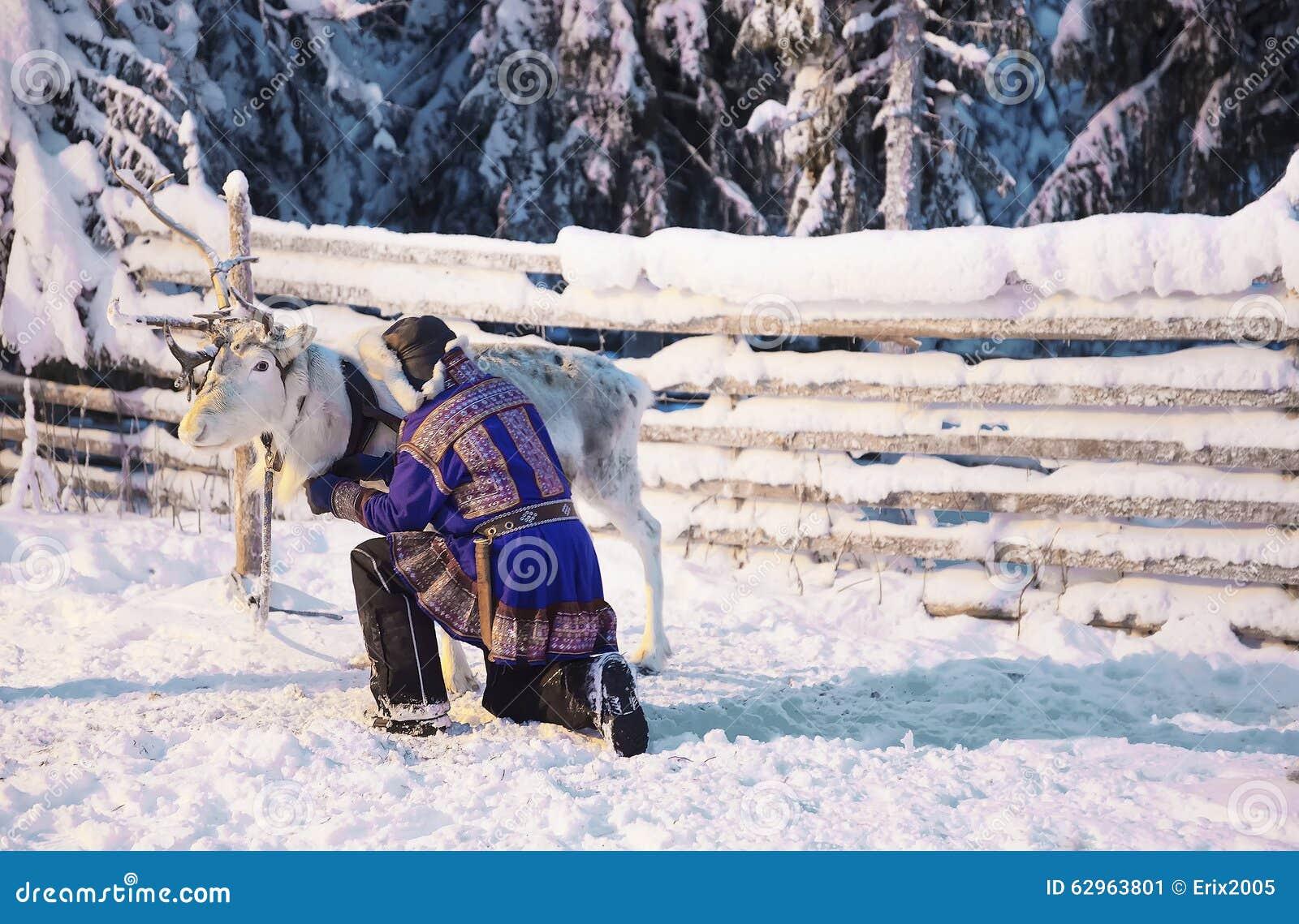 Λευκοί τάρανδος και άτομο Suomi σε Ruka στο Lapland στη Φινλανδία