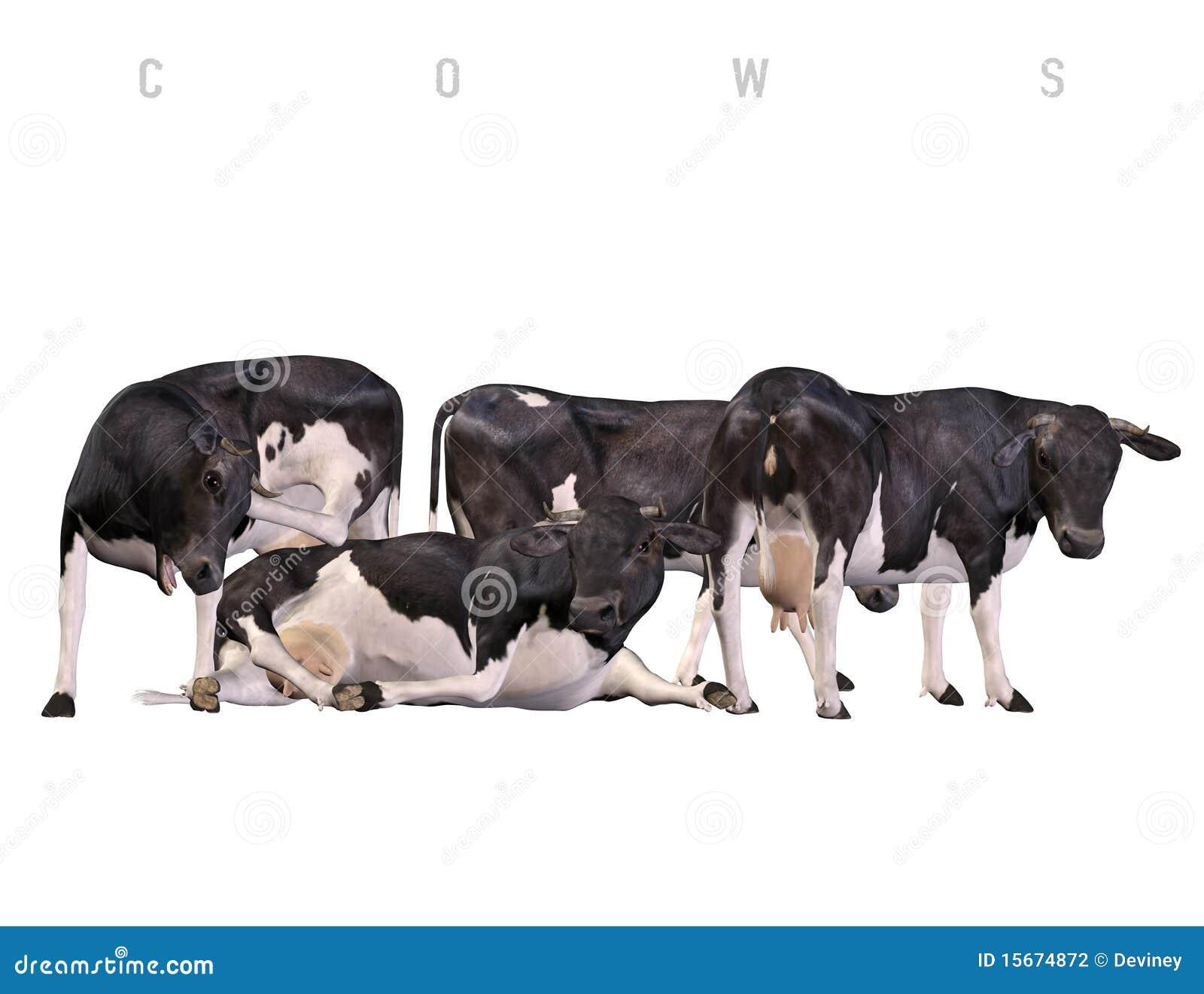 λευκό αγελάδων