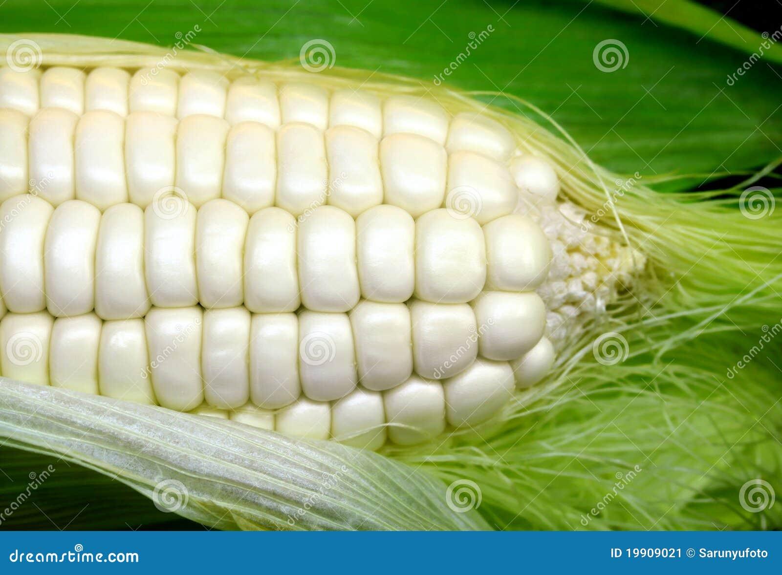 λευκό καλαμποκιού
