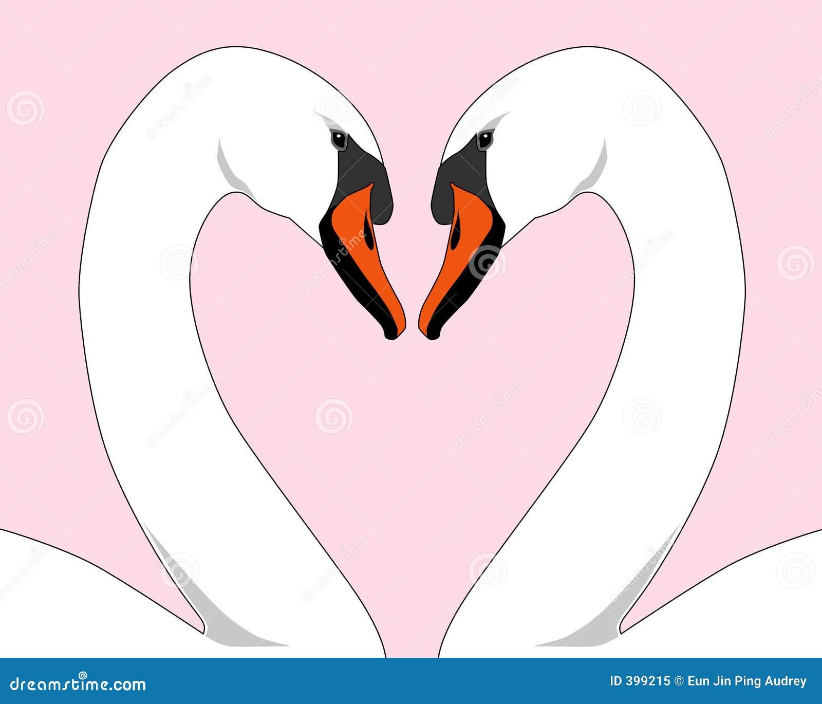 λευκό κύκνων αγάπης