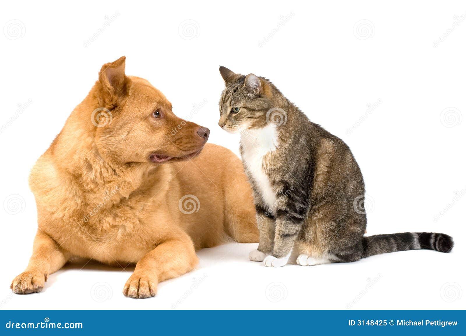 λευκό σκυλιών γατών ανασ&k