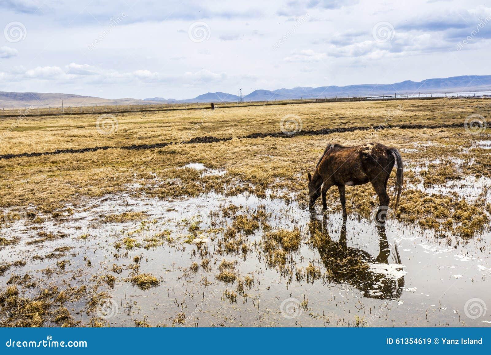 Λιβάδι με το νερό