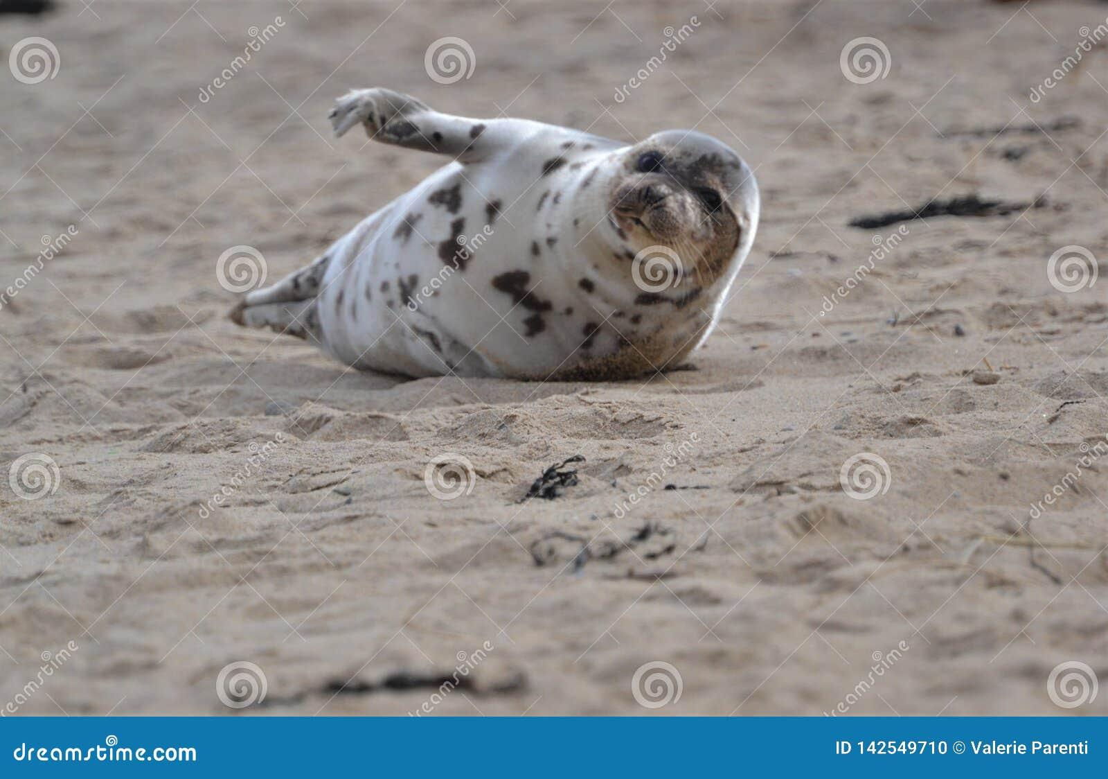 Λιμενική σφραγίδα που διασκεδάζει το πλήθος στην παραλία