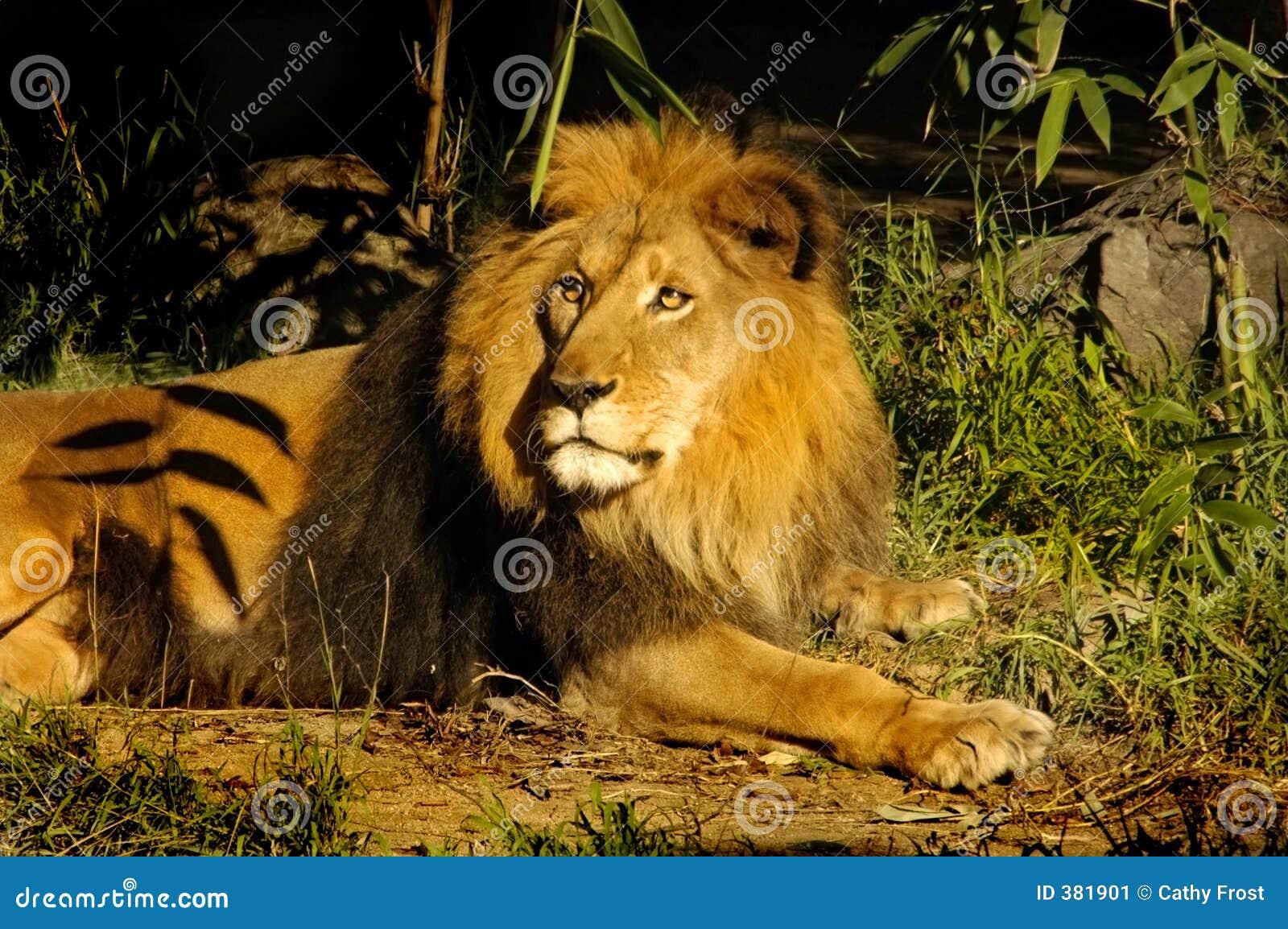λιοντάρι βασιλιάδων βασ&iota