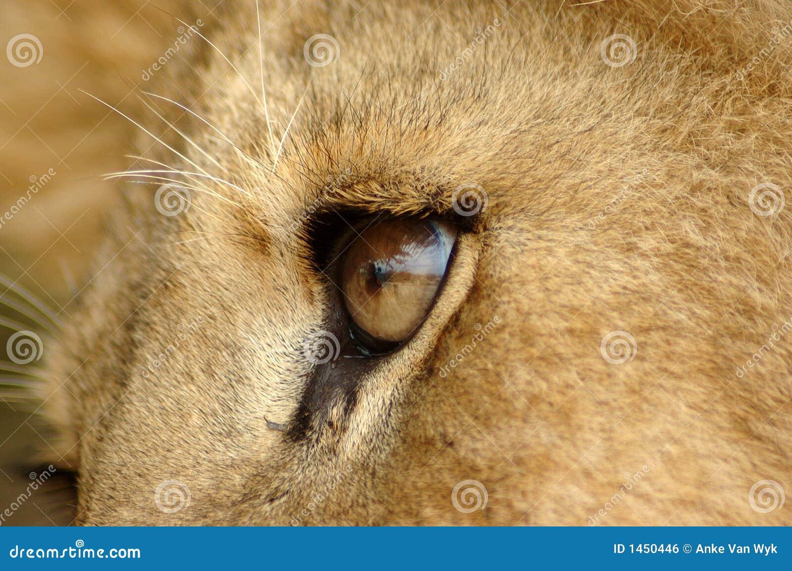 λιοντάρι ματιών