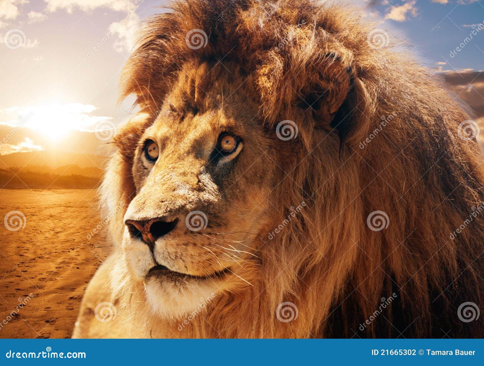 λιοντάρι μεγαλοπρεπές