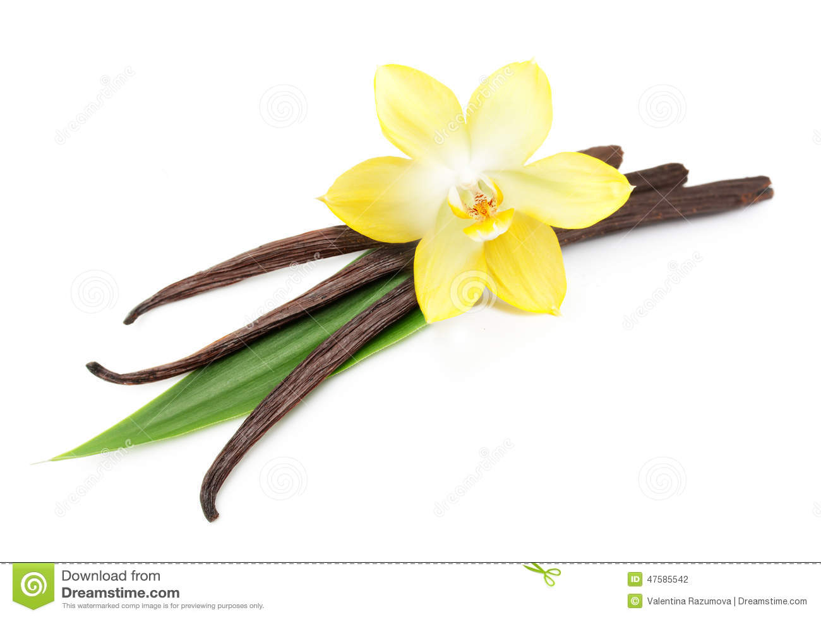 Λοβοί και λουλούδι βανίλιας που απομονώνονται