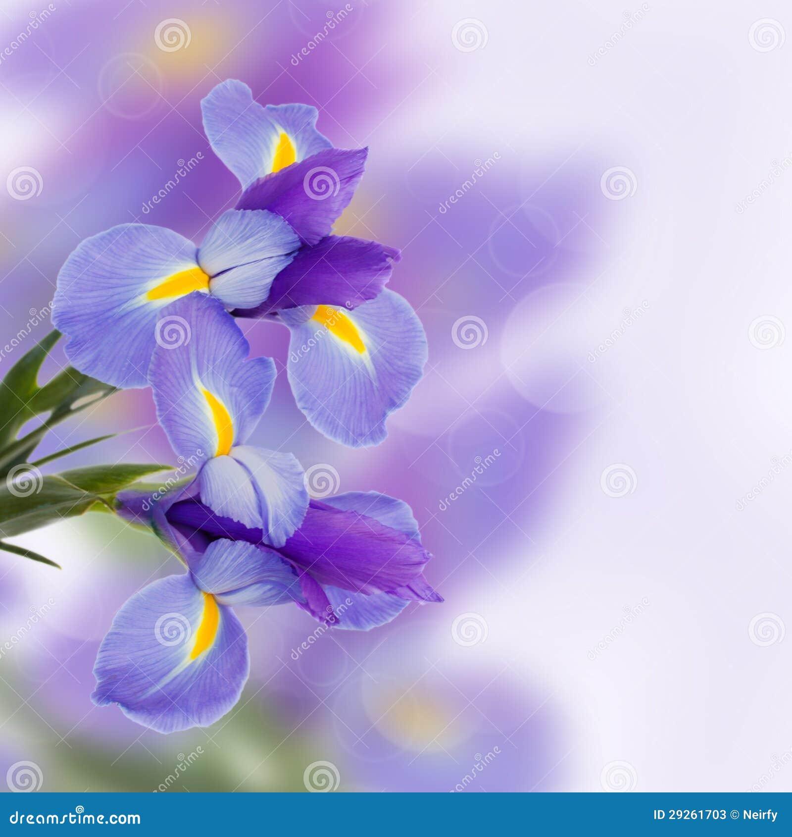 Λουλούδια ίριδων