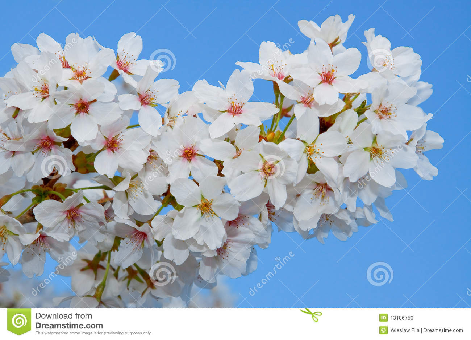 λουλούδια ανθών