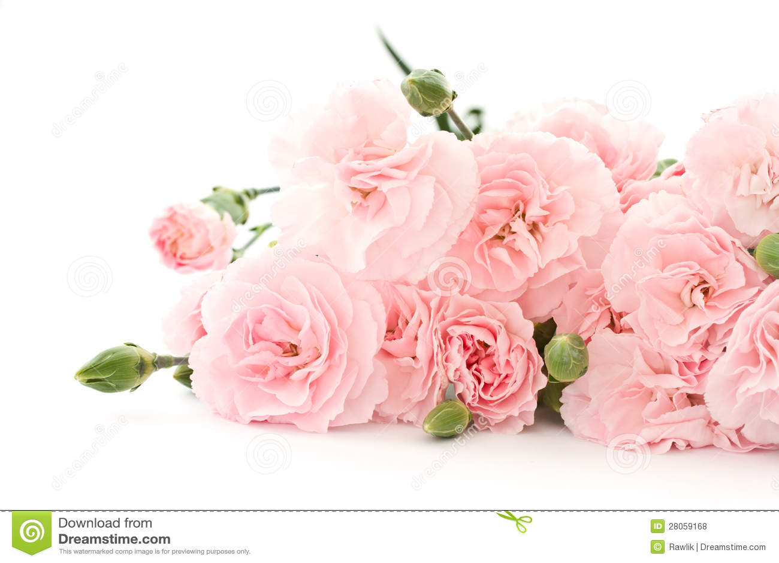 Λουλούδια γαρίφαλων