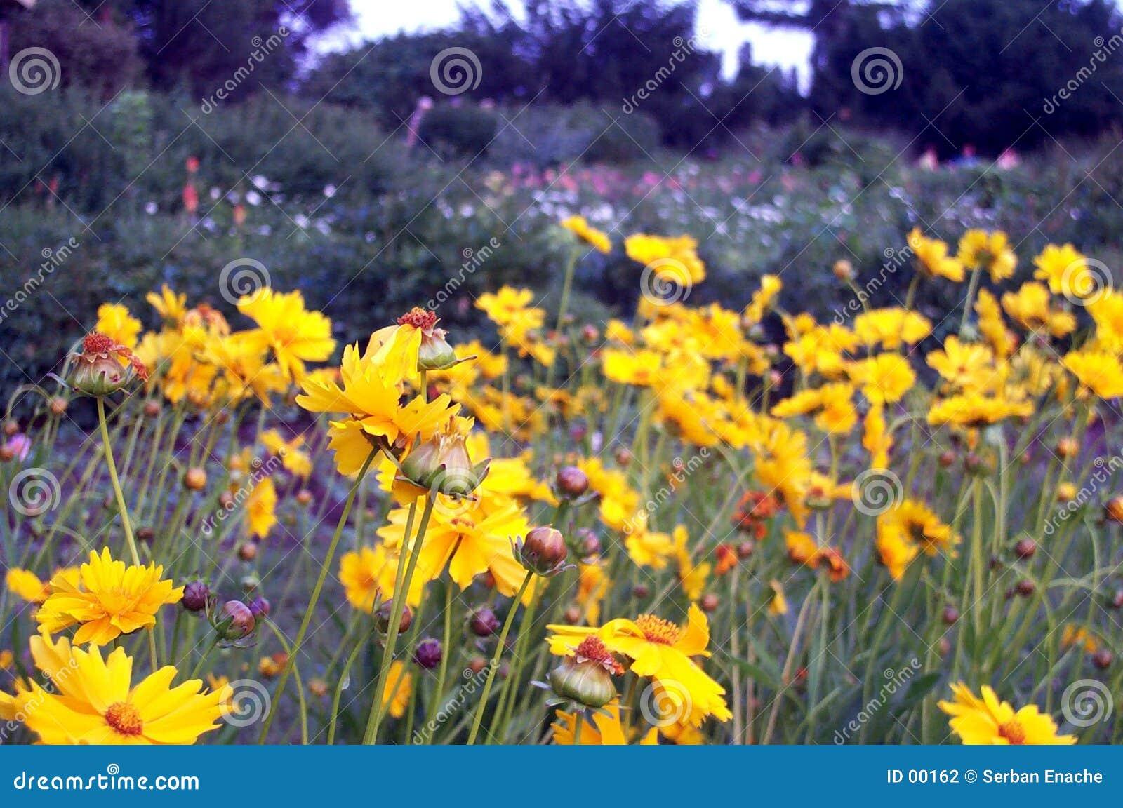 λουλούδια κίτρινα