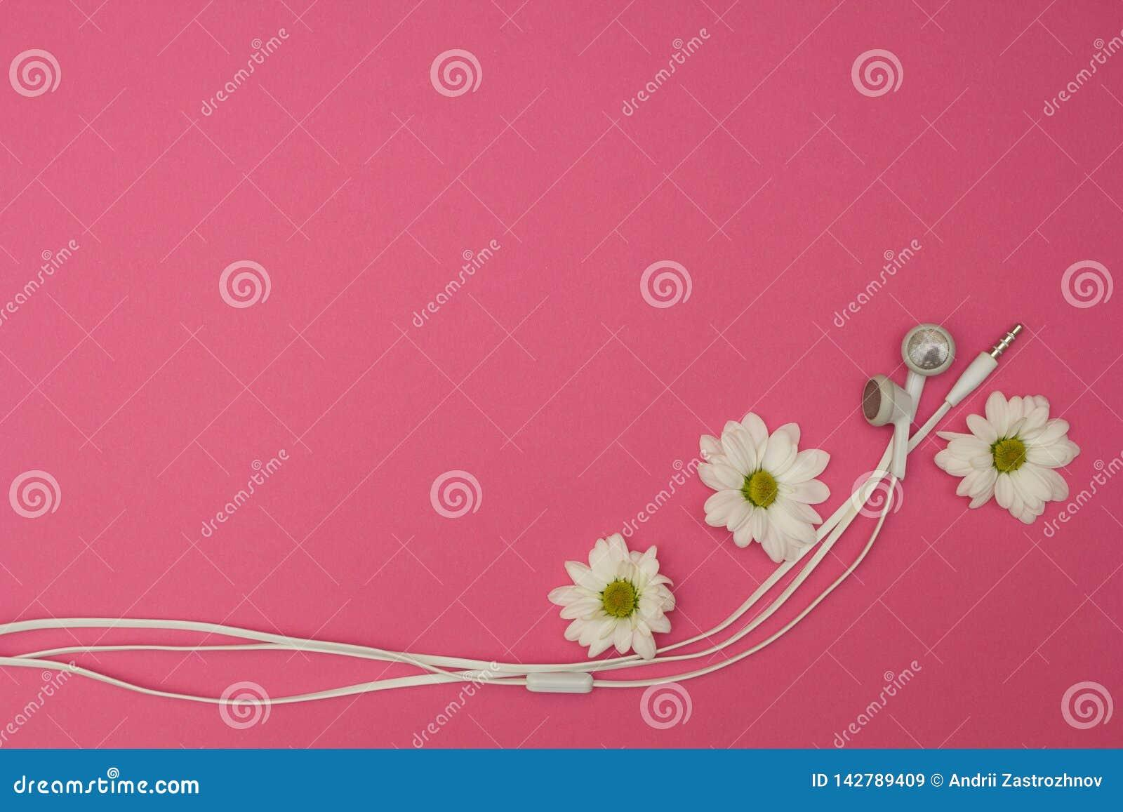 Λουλούδια και ακουστικό στο ρόδινο υπόβαθρο