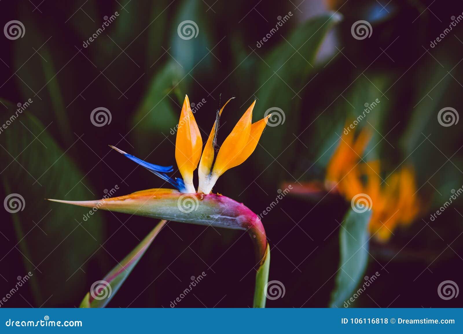 Λουλούδια Καλιφόρνιας, χειμερινή κηπουρική