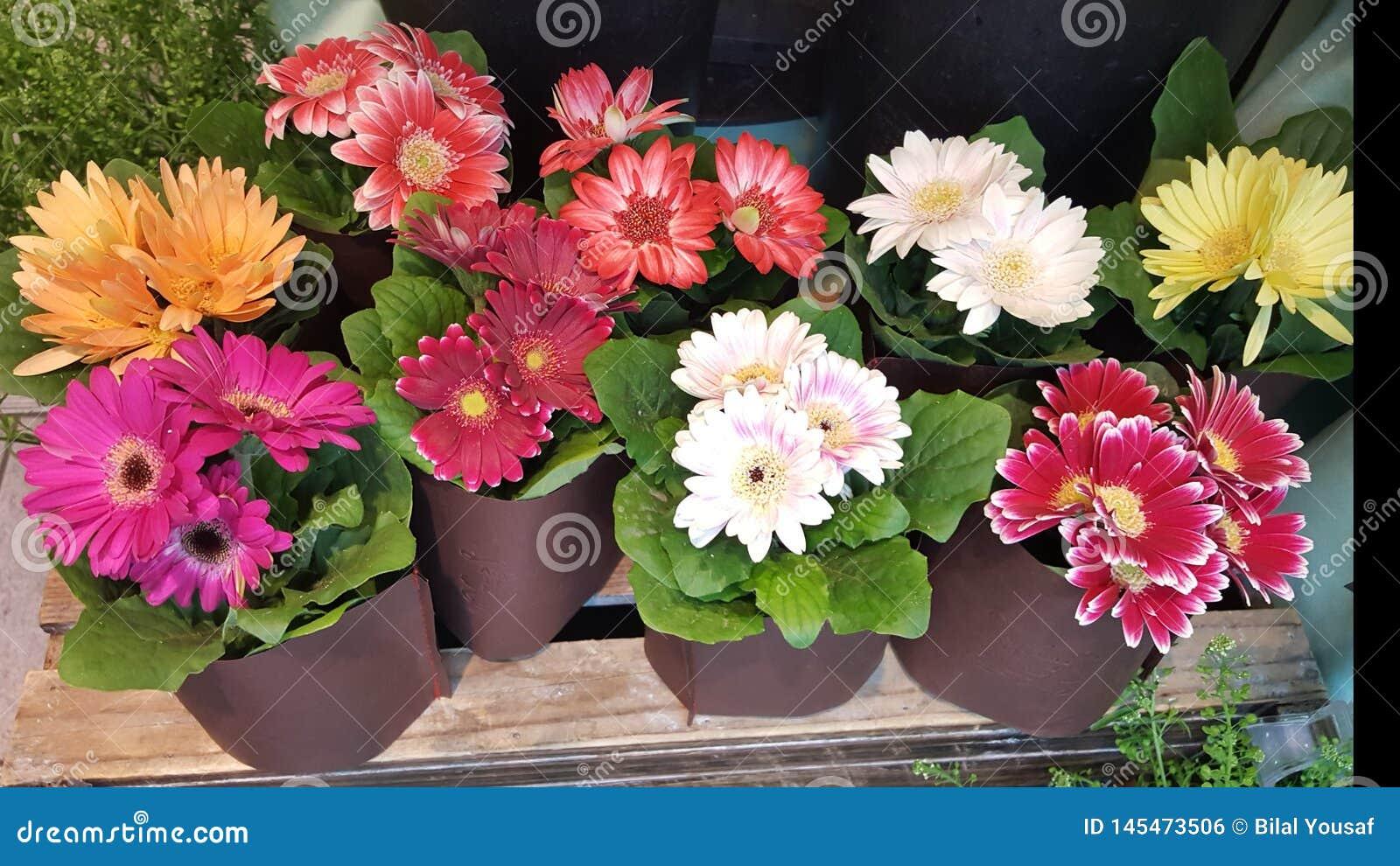 Λουλούδια μιγμάτων