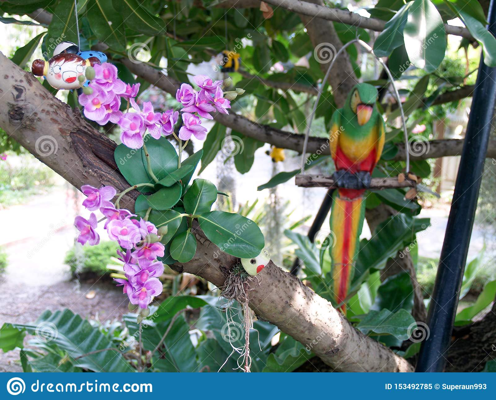 Λουλούδια στον κήπο με τους παπαγάλους