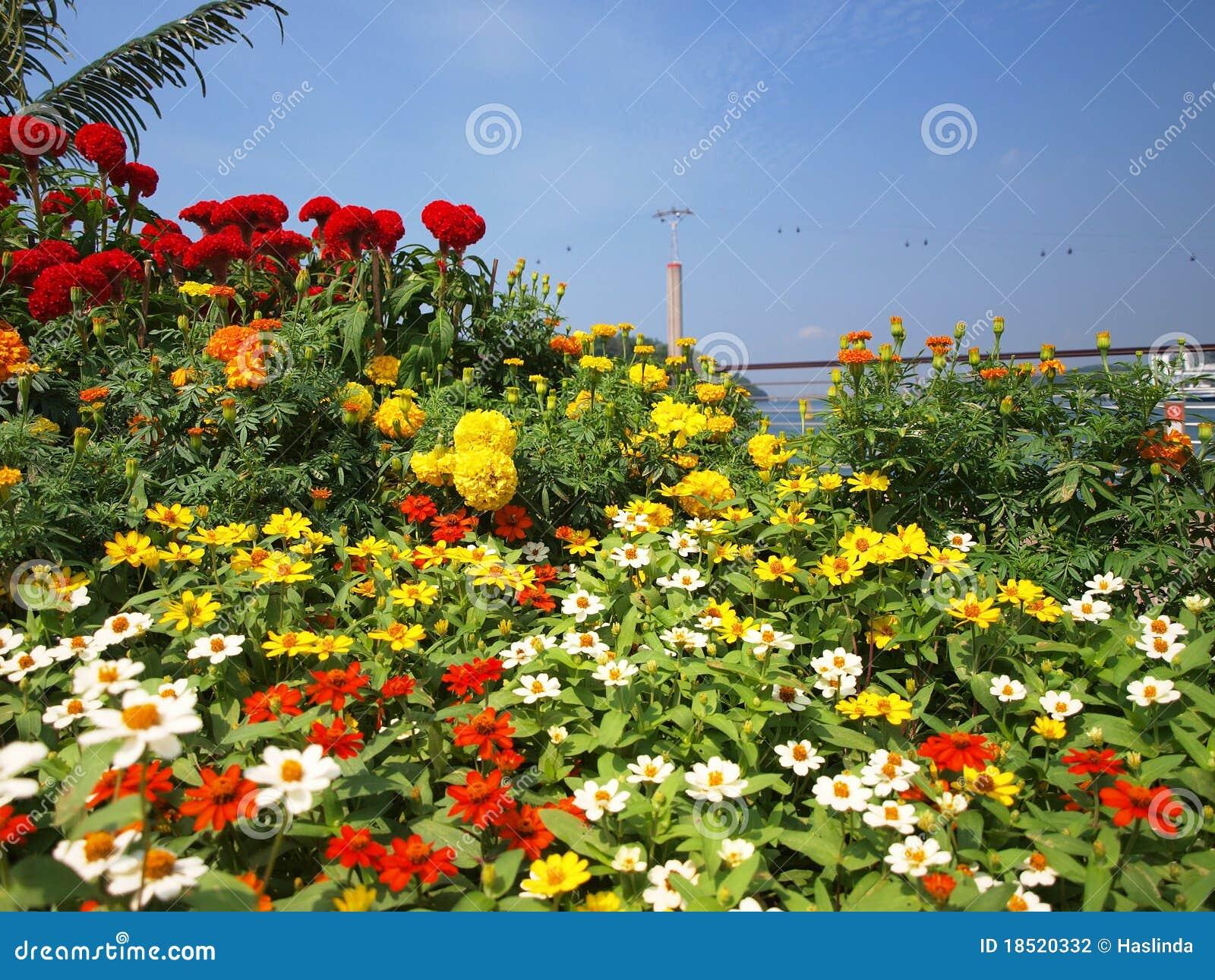 λουλούδια τελεφερίκ