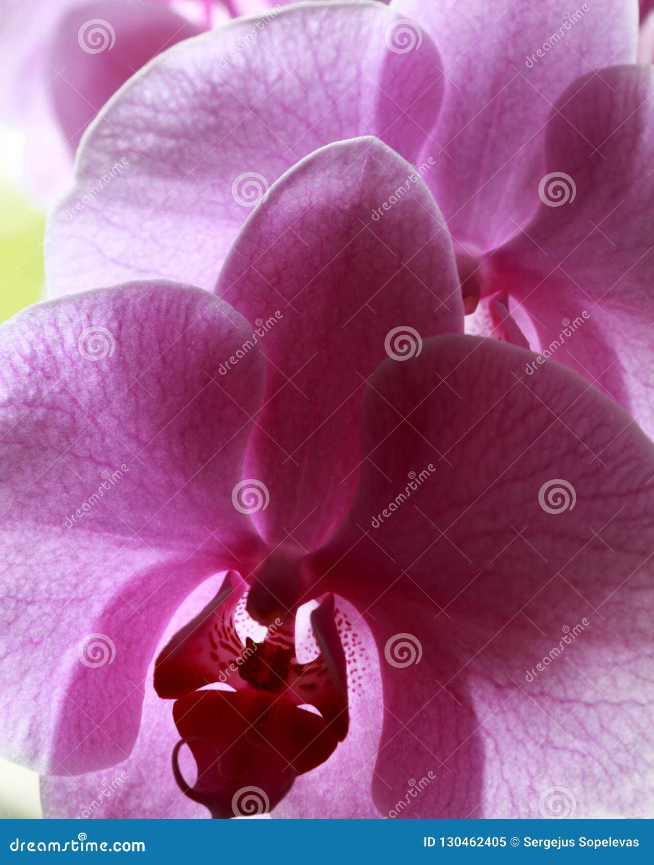λουλούδια της αγάπης