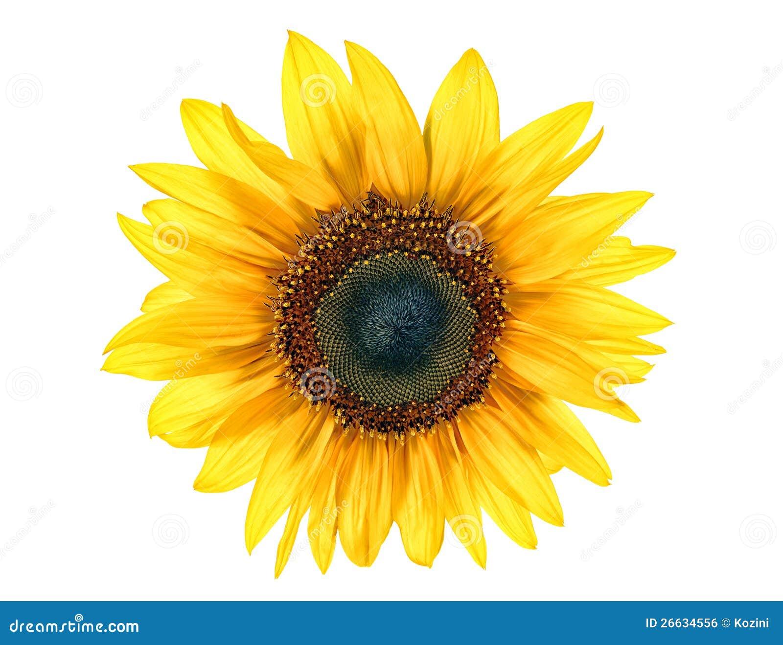 Λουλούδι ήλιων