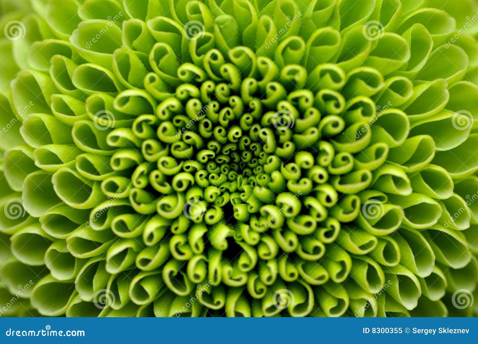 λουλούδι ανασκόπησης πρ