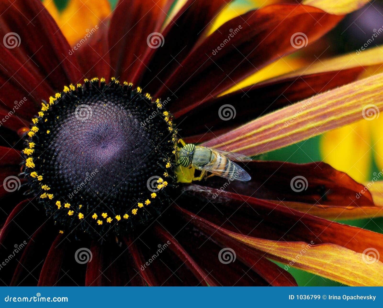 λουλούδι μελισσών