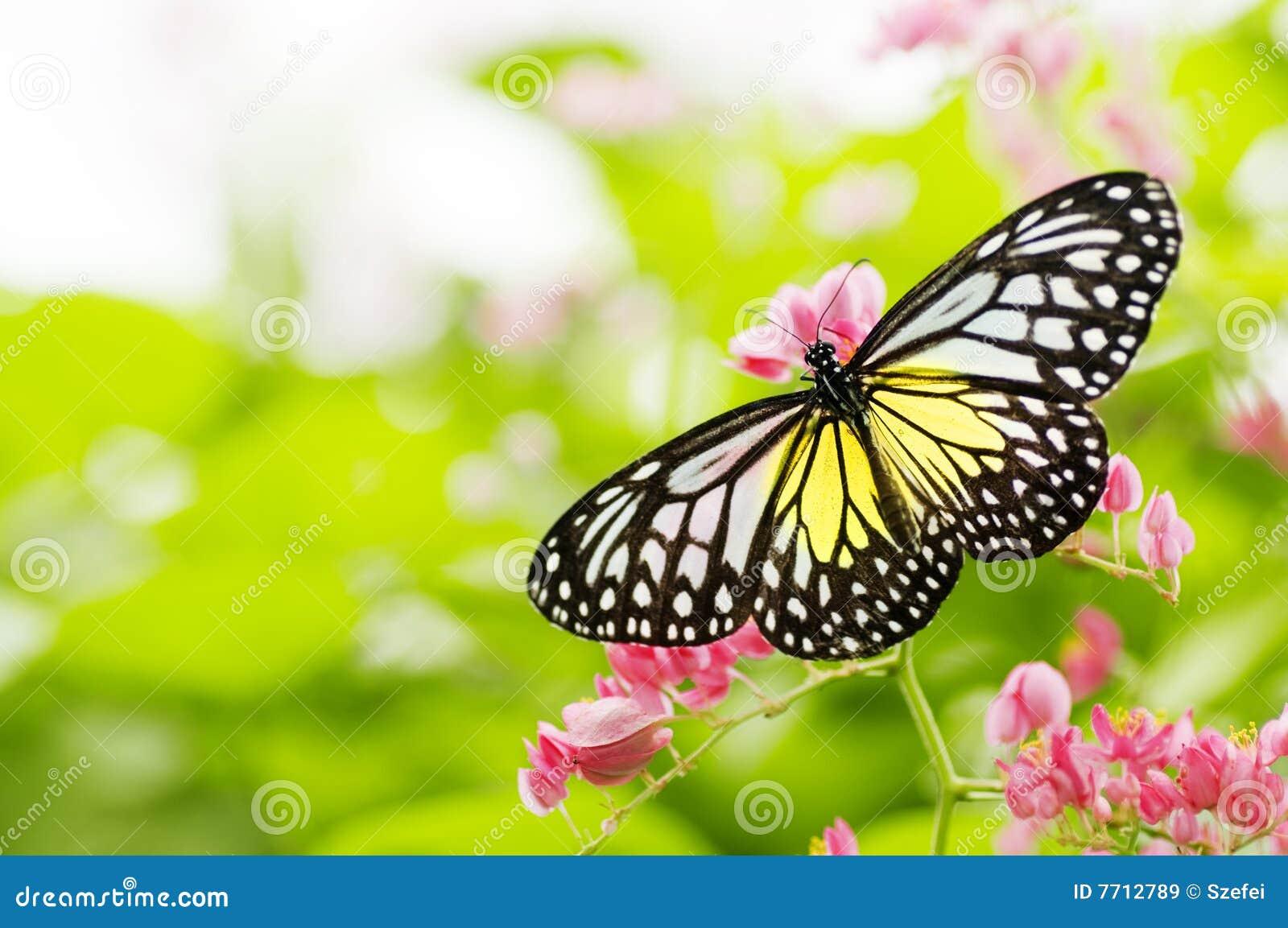 λουλούδι σίτισης πετα&lambda