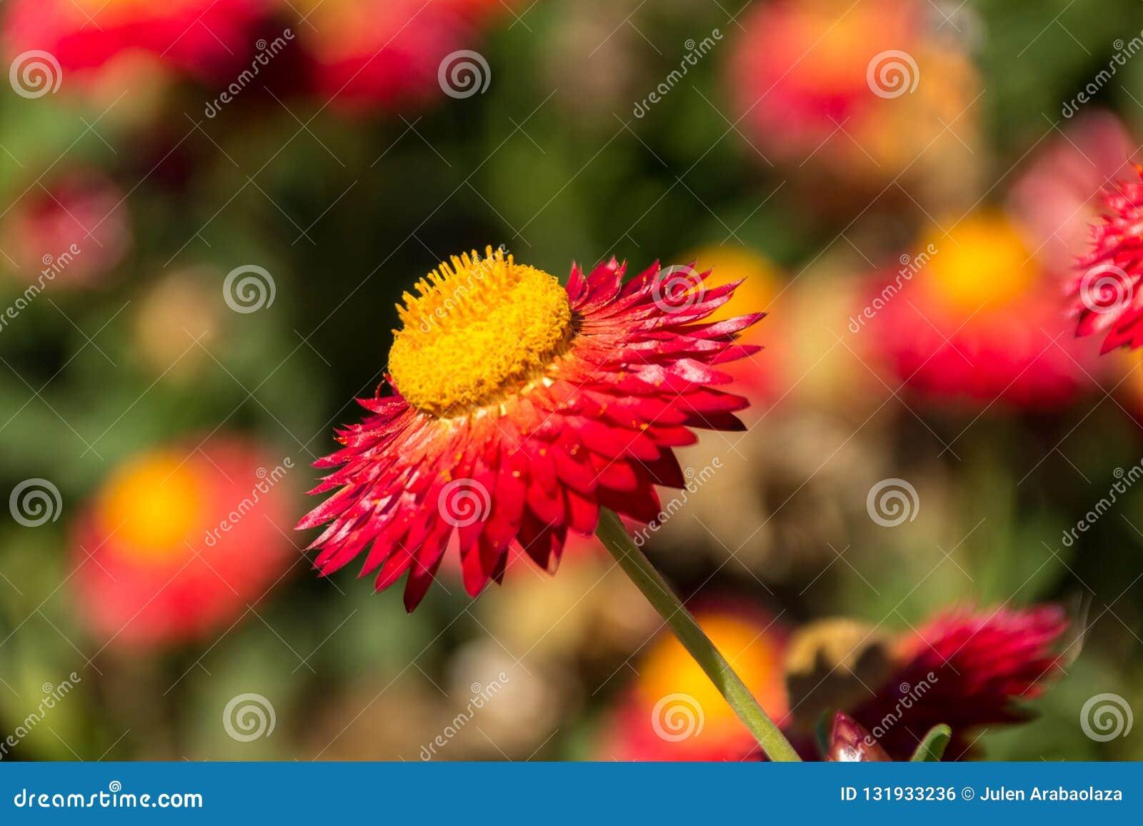 Λουλούδι σε ένα πάρκο