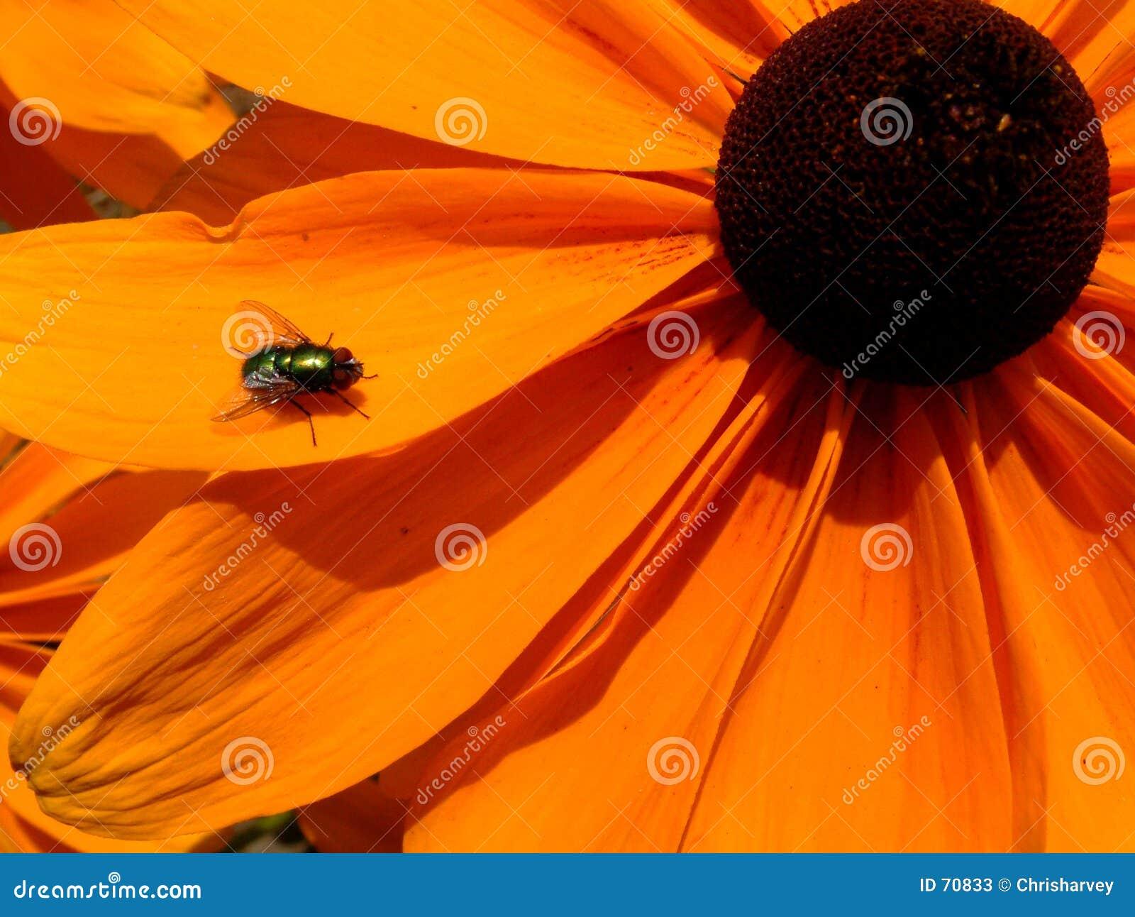 Λουλούδι στην άνθιση 16