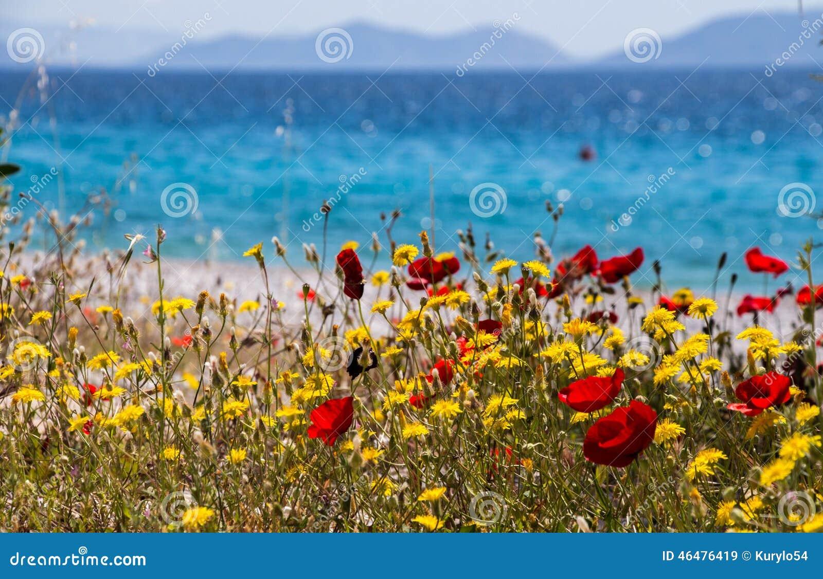 Λουλούδια θαλασσίως Παραλία Kineta, Ελλάδα