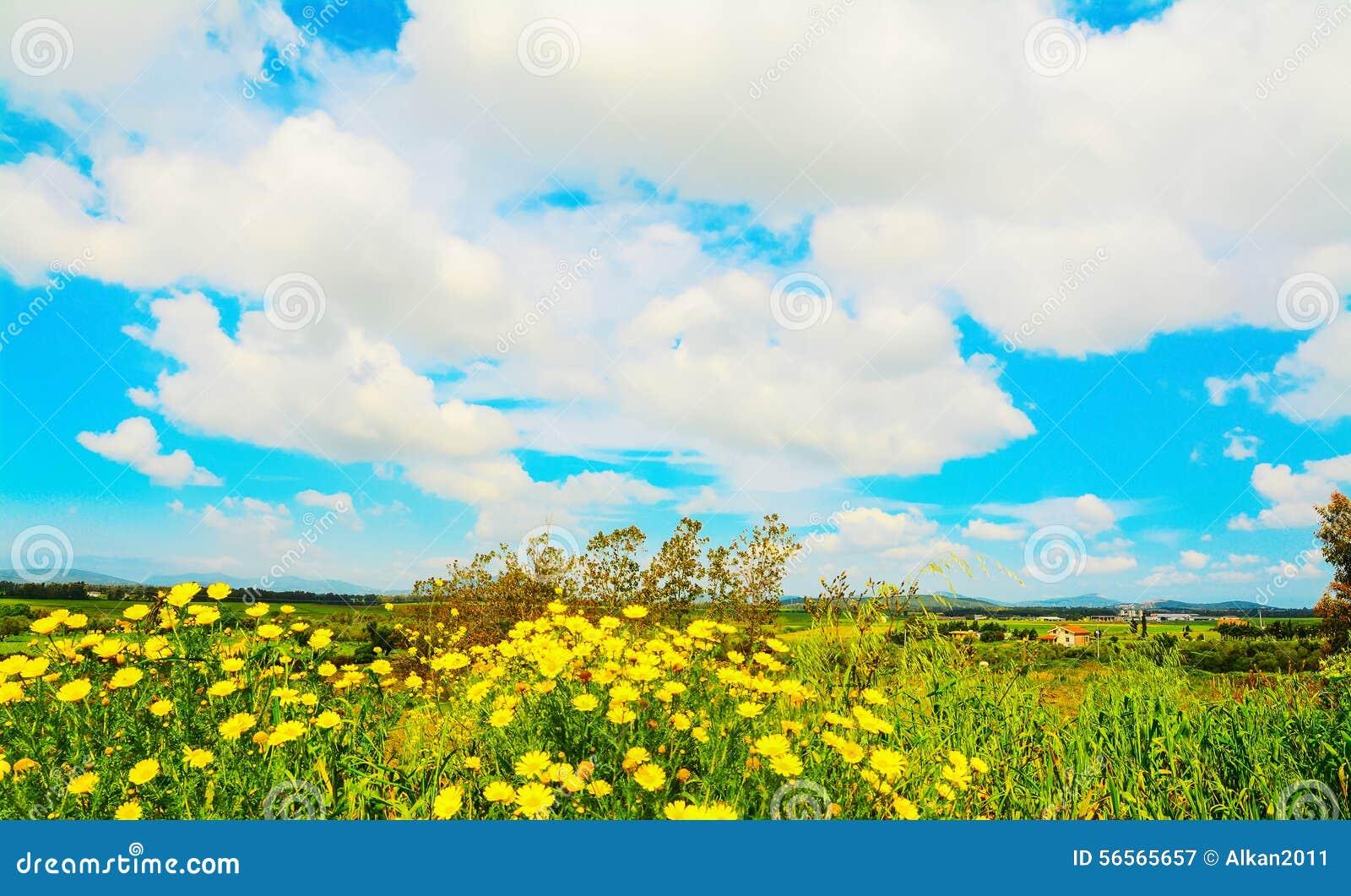 Download Λουλούδια κάτω από τα άσπρα σύννεφα Στοκ Εικόνα - εικόνα από εποχή, κηπουρική: 56565657