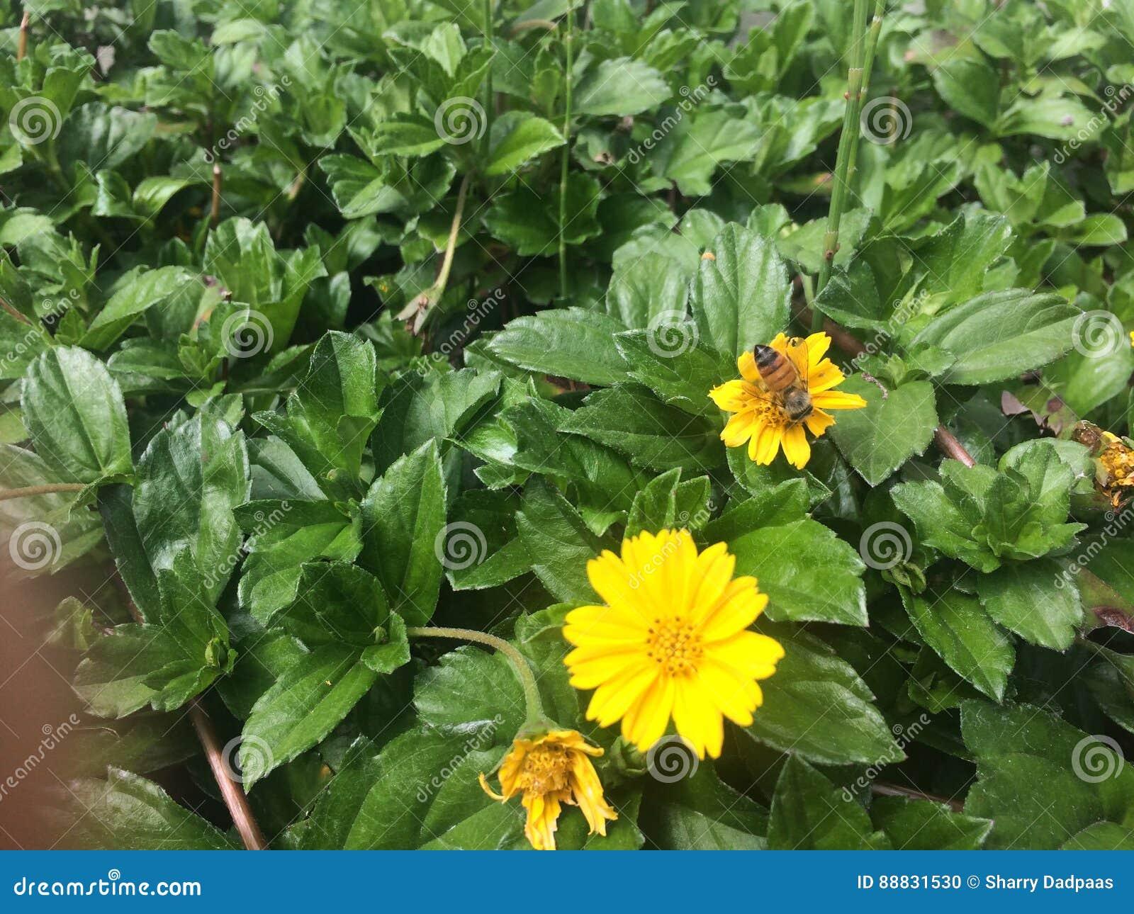 Λουλούδια και μέλισσες