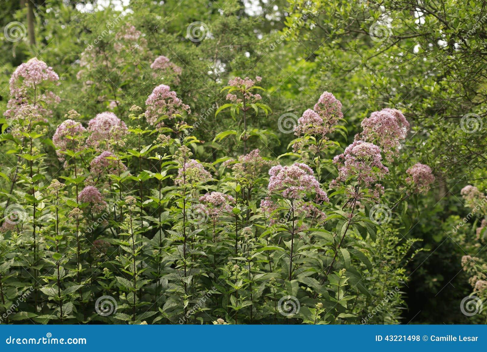 Λουλούδια σε έναν κήπο