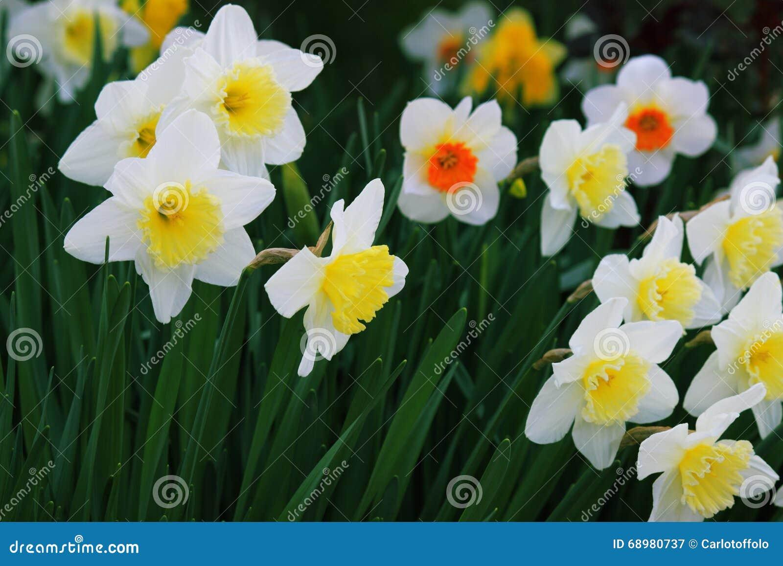 Λουλούδια στον κήπο