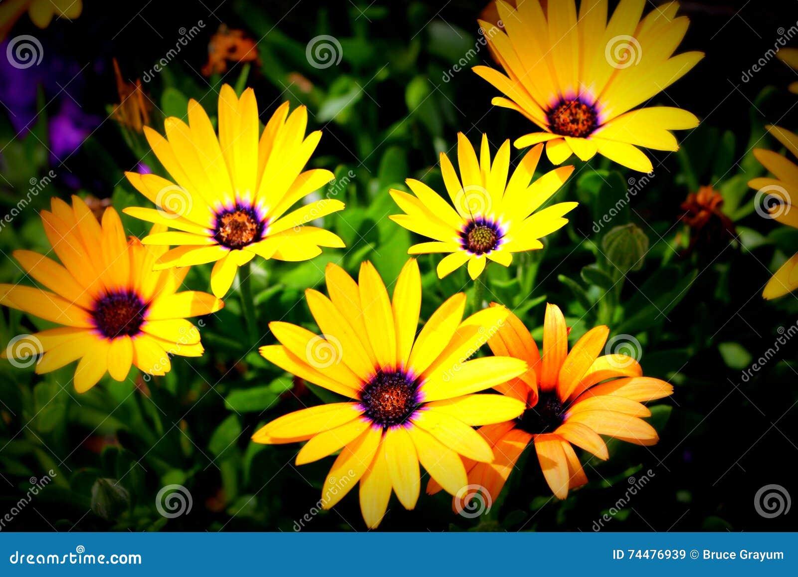 Λουλούδια στο κέντρο Montpelier, Αϊντάχο ιχνών του Όρεγκον