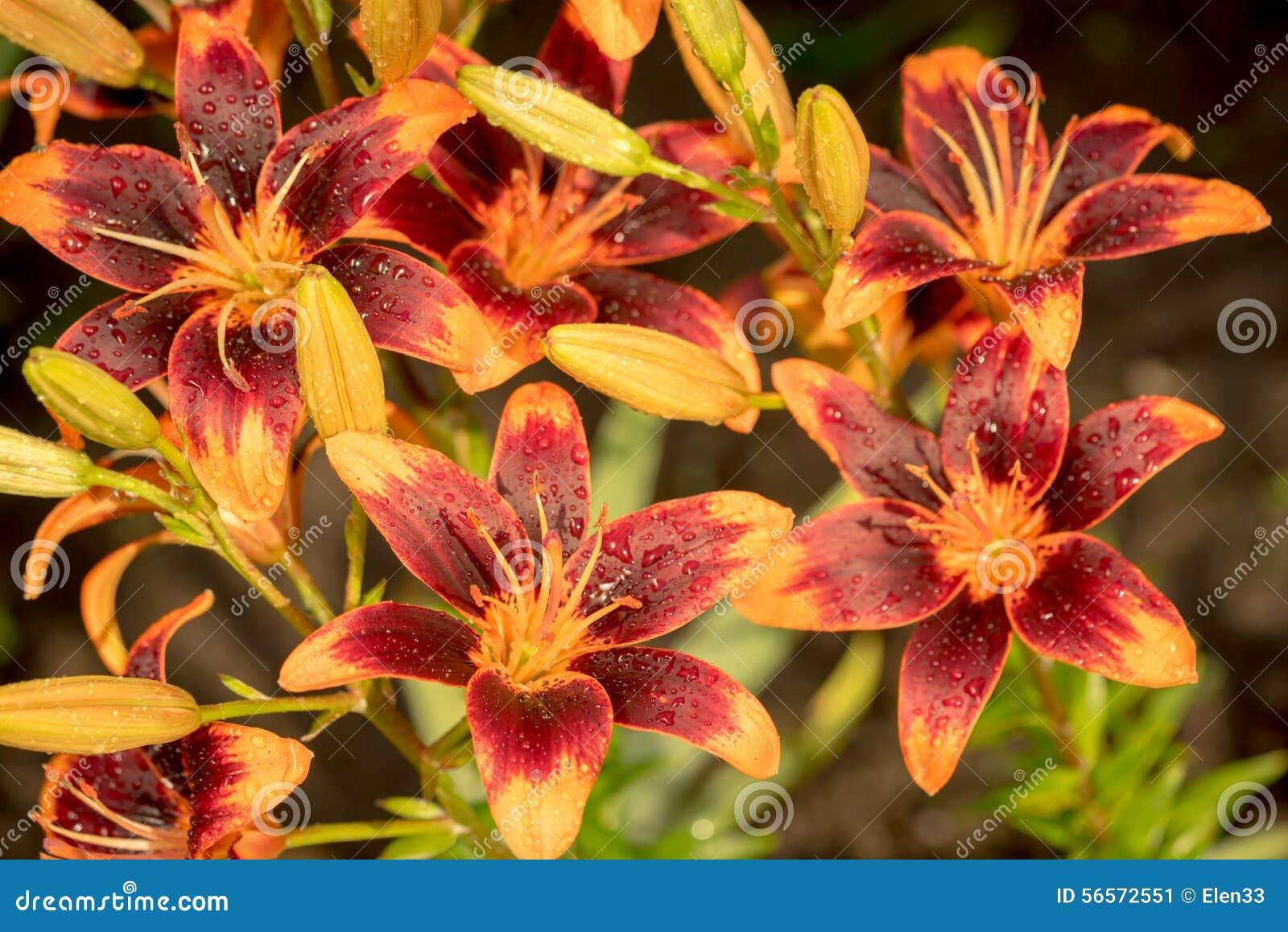 Download Λουλούδια στοκ εικόνα. εικόνα από μακροεντολή, φρεσκάδα - 56572551