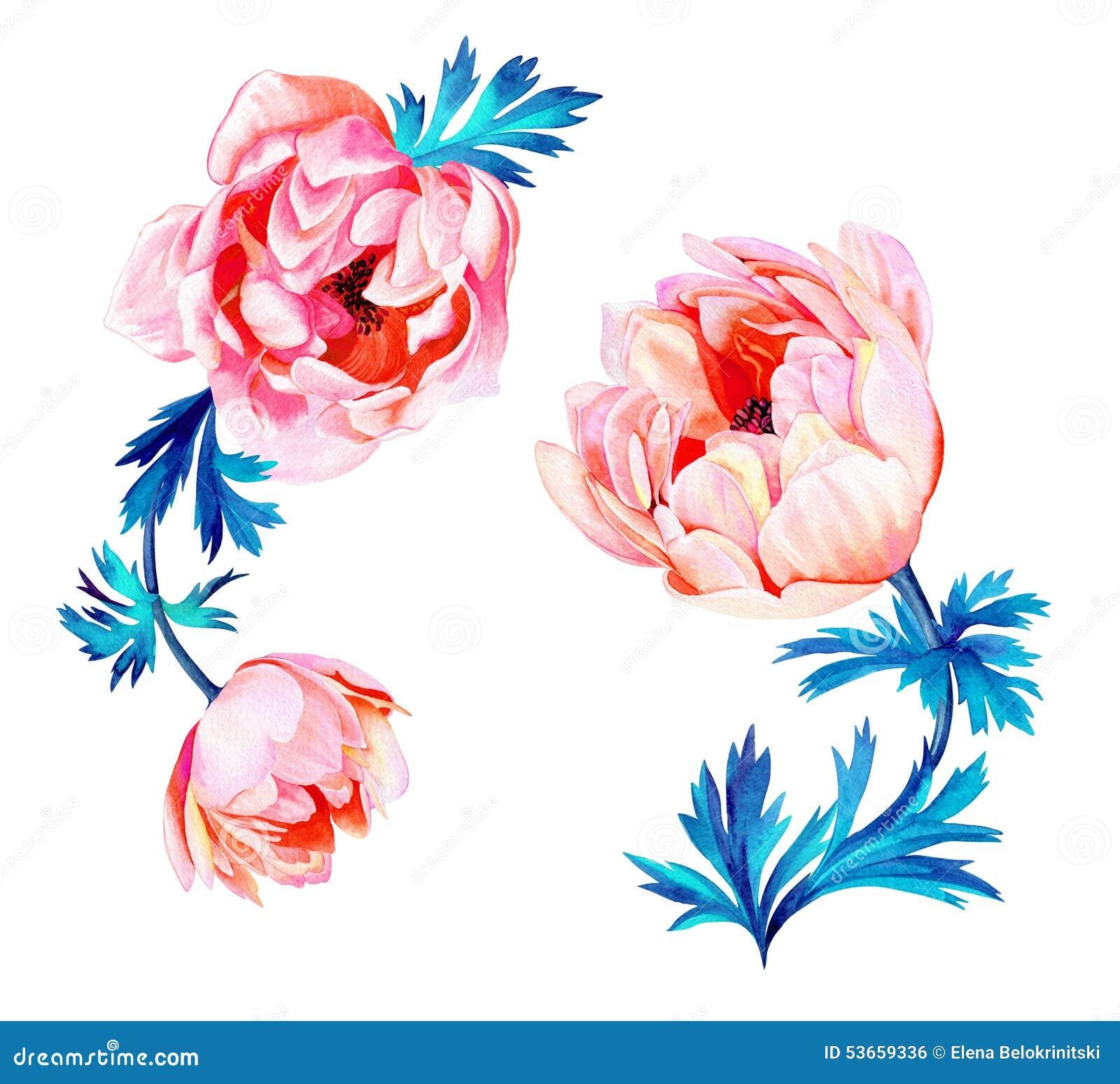 Λουλούδια Anemone