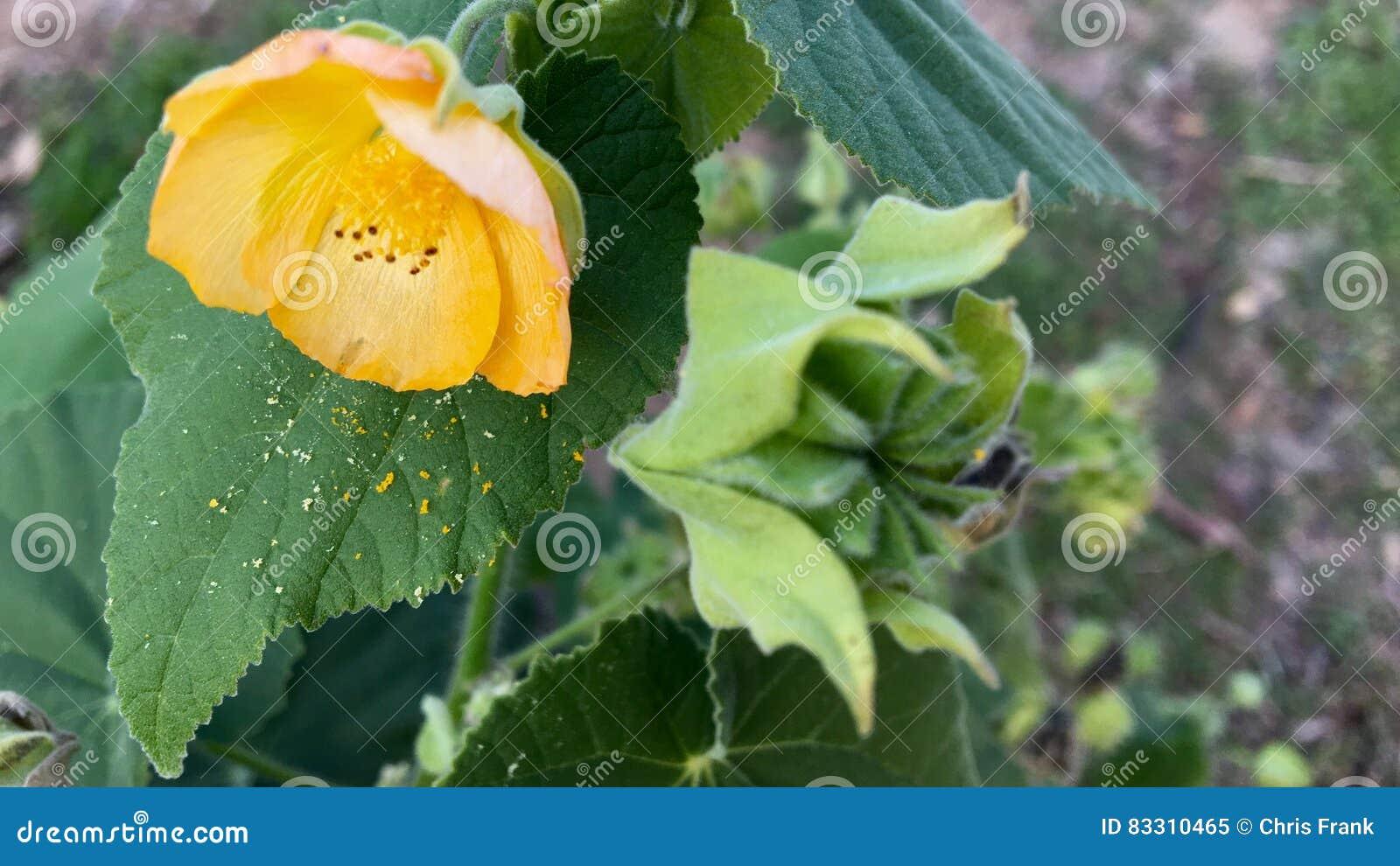 Λουλούδι και γύρη