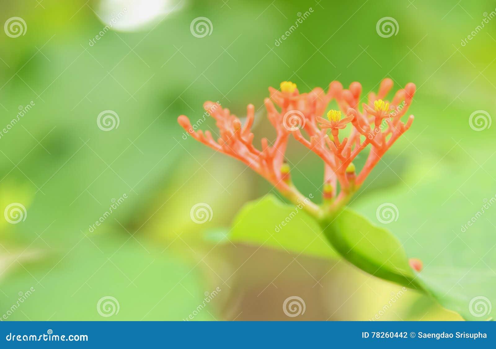 Λουλούδι κόκκινου φωτός