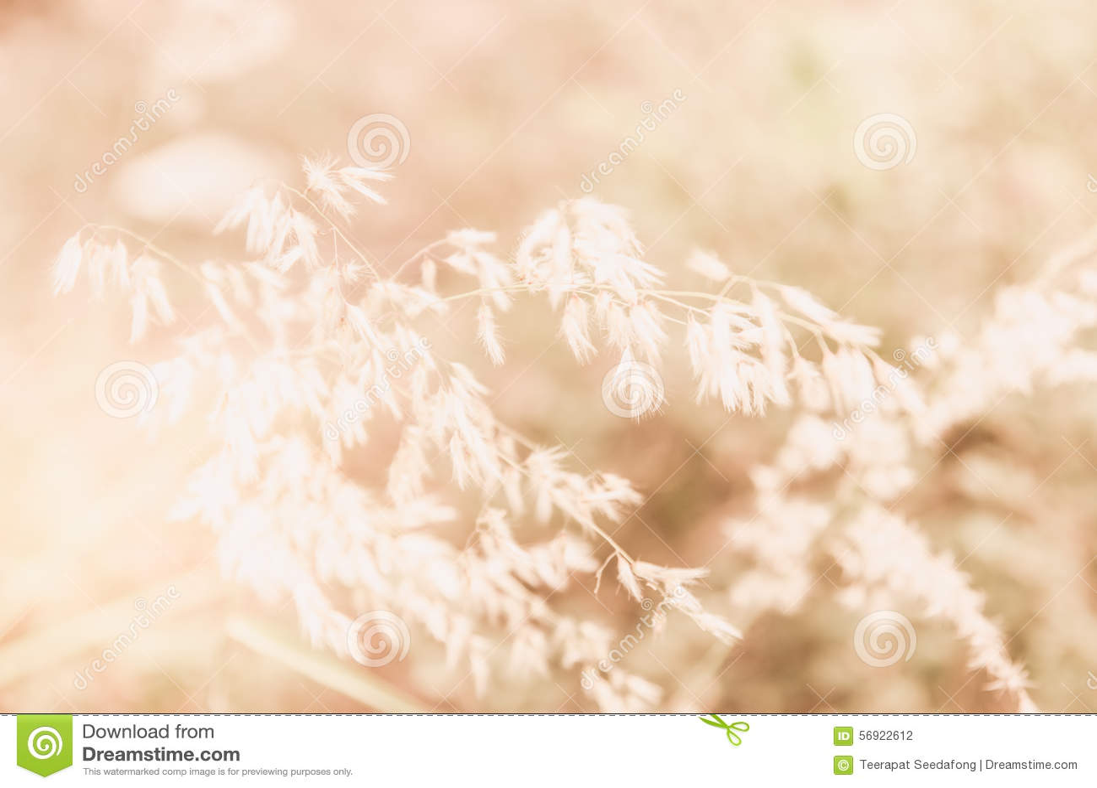 Λουλούδι πρωινού